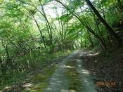03 新緑の林道(1)DSC05858.JPG