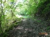 04 新緑の林道(2)DSC05870.JPG