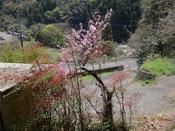 07 桃の花DSC05608.JPG