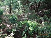 11 潅木の中を下るDSC05897.JPG