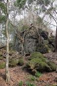 11岩亀山DSC00375.jpg