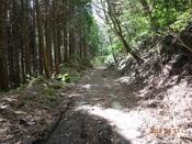 15 林道風景(1)DSC05730.JPG
