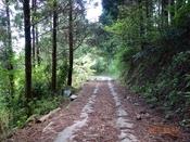 17 林道風景(2)DSC05735.JPG