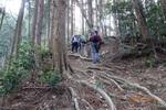 17DSC00094山道を進む(6).JPG