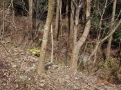 (15)二股木の左を下るDSC05426.JPG