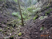 (20)谷中を上る3DSC05431.JPG