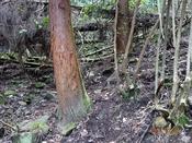 (26)倒木帯入口DSC05443.JPG