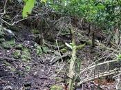 (27)倒木帯を行くDSC05444.JPG