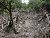 31.なぎ倒された木々DSC02600.JPG