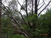 31 山桜の向うに小鹿山DSC05587.JPG