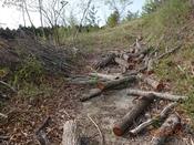 32 櫟の伐採木(1)DSC05927.JPG