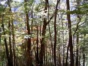 016縦走路�D並び立つ木々.jpg