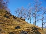 02 岩と櫟(1).jpg