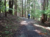 02 林中を歩くDSC05152.JPG