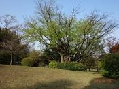 02 樹木DSC05647.JPG