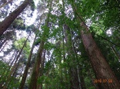 03.樹林DSC02242.JPG