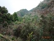 03 向平山登路の谷DSC03471.JPG