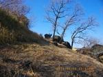 03 岩と櫟(2).jpg