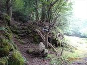 03 林道を渡るDSC05143.JPG