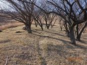 04 桜の園南端DSC06726.JPG