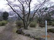 05. 満開の桜DSC04160.JPG
