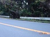 05. 県道からの降り口DSC03284.JPG