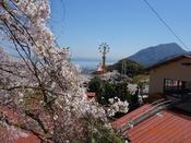 05 桜と園内DSC05606.JPG
