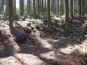 05 植林帯前を右へDSC04111.JPG