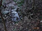 05 水流のある谷DSC03450.JPG