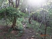 06.内山への登路DSC02433.JPG