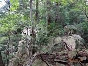 06 岩の多い山道DSC05158.JPG