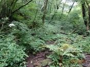 10. かくし水上の森DSC00912.JPG