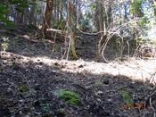 10 尾根上の岩DSC04116.JPG