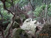 10 狭い山道DSC05163.JPG