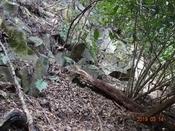 11 岩場下を辿るDSC05501.JPG