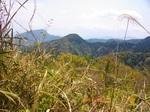 11林道から向平山方面.jpg