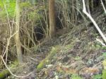11IMGP6138暗い林中へ.JPG