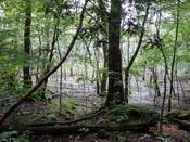 12. 湿地の陽射DSC00920.JPG