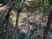 13. 木の間の黄葉DSC03317.JPG