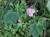 13. 路傍の花�BDSC05091.JPG
