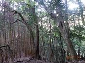 13.樫山に入るDSC02938.JPG