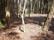 13.深い杉の森へDSC04008.JPG