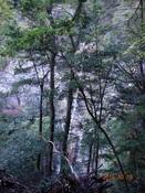 13.観音滝DSC01102.JPG
