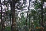 14DSC00088自然林.JPG