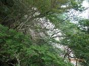 15.崩壊地(木の間から)DSC02452.JPG
