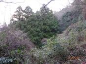 15 右手の森DSC03461.JPG