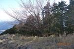 15DSC00182山桜.JPG