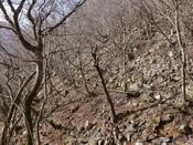 17. 右岸の廃林道DSC03246.JPG