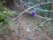 18 紫色の実DSC03495.JPG