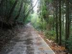 19IMGP6712伸びる林道.JPG